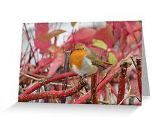 Ireland - Blarney Robin Greeting Card