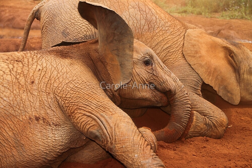 Baby Elephants Playtime  by Carole-Anne