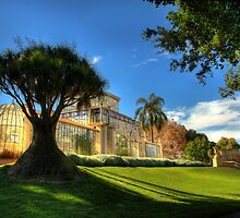 Palm House, Adelaide Botanic Gardens by Graham Jones