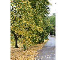 Ireland - Blarney Walk Photographic Print