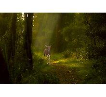Bambi's visit Photographic Print