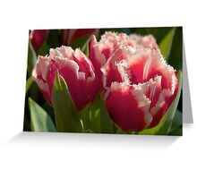 Fringed tulips Greeting Card