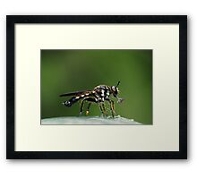 Skewered Framed Print