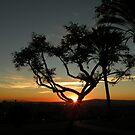 Sunset for Ermelinda by Rita  H. Ireland