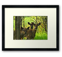 "Old Friends, and a ""Brand-new"" Friend :) Framed Print"