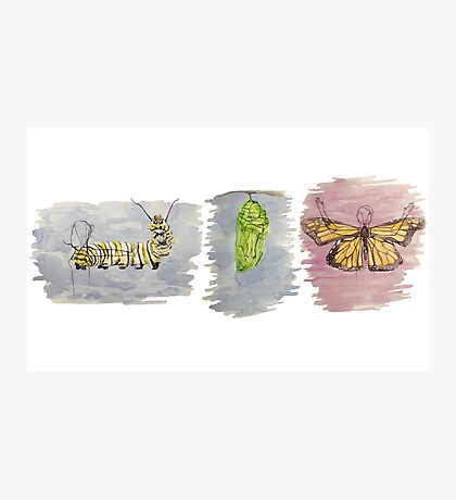 Metamorphosis Trio Photographic Print