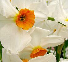 Drowsing Daffodils by Rebecca Cruz