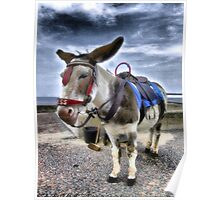 Donkey HDR Poster