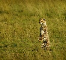 Curiosity on two small feet by Owed To Nature