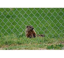 Baseball Field Critters Photographic Print