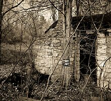 Abandoned Cottage in the Woods by P.T. Robertson