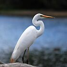 Egret at the Resevoir by Lozzar Landscape