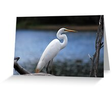 Egret at the Resevoir by Lorraine McCarthy Greeting Card