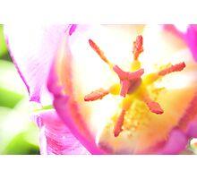 Electric Tulip Photographic Print