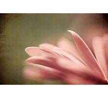 ~ New Journeys ~ Photographic Print