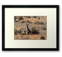 """Watercoloured""  kangaroos Framed Print"