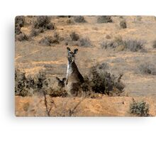 """Watercoloured""  kangaroos Metal Print"