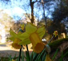Flowers 05 by Briana Castorina