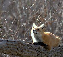 Squirrel by Jay Ryser