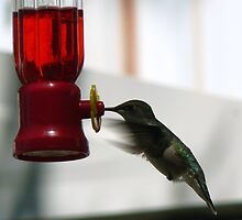 Hummer In Houlton Wis. by oo2bpooh