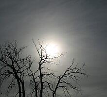 Afternoon Sun by Alyssa Passlow