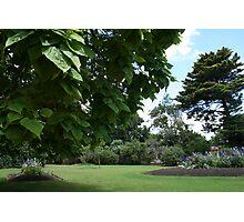 botanic garden Photographic Print
