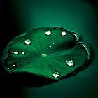 rain drops by Amagoia  Akarregi