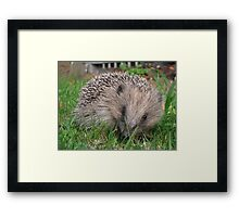Small but brave Framed Print
