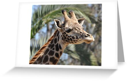 Giraffe by Christian Eccleston