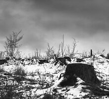 Tree Cemetery by hynek