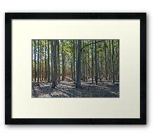 Plantation Pattern Framed Print