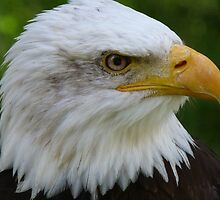 American Eagle Face by tshirtdesign