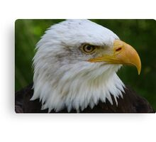 American Eagle Face Canvas Print