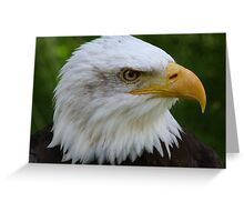 American Eagle Face Greeting Card