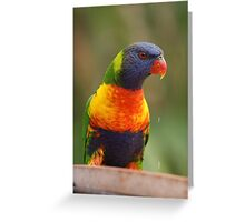 Australian Rainbow Lorikeet Greeting Card