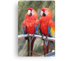 Red Macaw Parrots Canvas Print