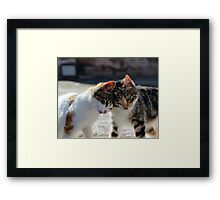Loving Kittens Framed Print