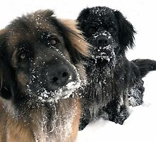 Dogs Love Snow by tshirtdesign