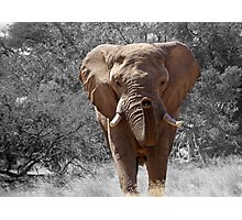 African Elephant Photography Photographic Print