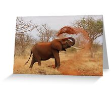 African Elephant Cleaning Greeting Card