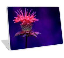 Bee Balm Laptop Skin