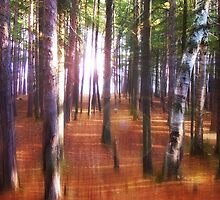 Morning In The Forest by Phil Perkins