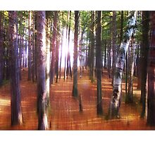 Morning In The Forest Photographic Print