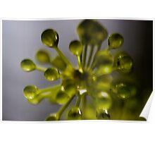 Green Burst Poster