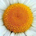 Daisy Sun by ApeArt
