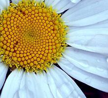 Daisy Drops by ApeArt