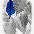 blue leaf by SNAPPYDAVE