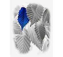 blue leaf Photographic Print