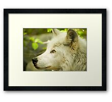 Artic Wolf - Forest of Wolves Series © Framed Print