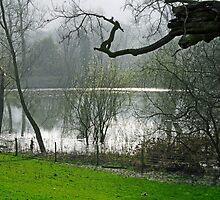 Pond near Home Farm, Ilam by Rod Johnson